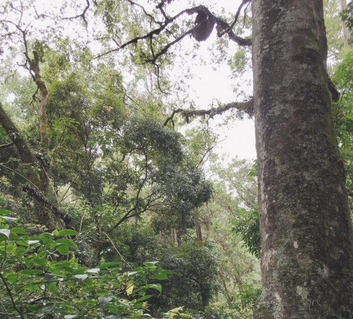 Honeycomb trees in Munnar