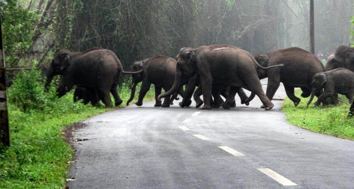 Wayanad - Kerala