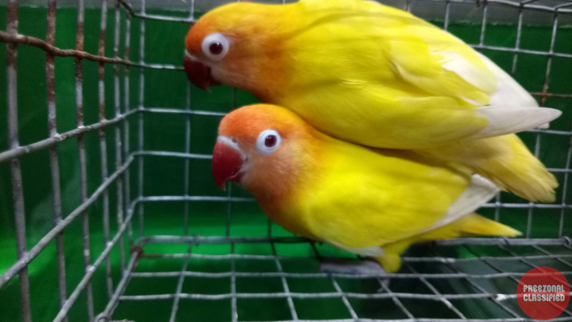 Bamboos Pets Exotics Pet Shop In Chalai Thiruvananthapuram Kerala Reviews Offers Contact Numbers Details Rating