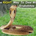 Indian Herbs Can Cure SnakeBite
